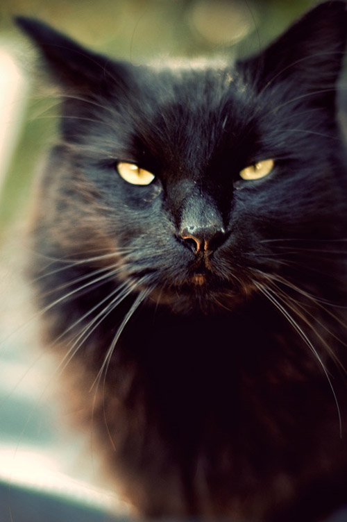 cat looks like
