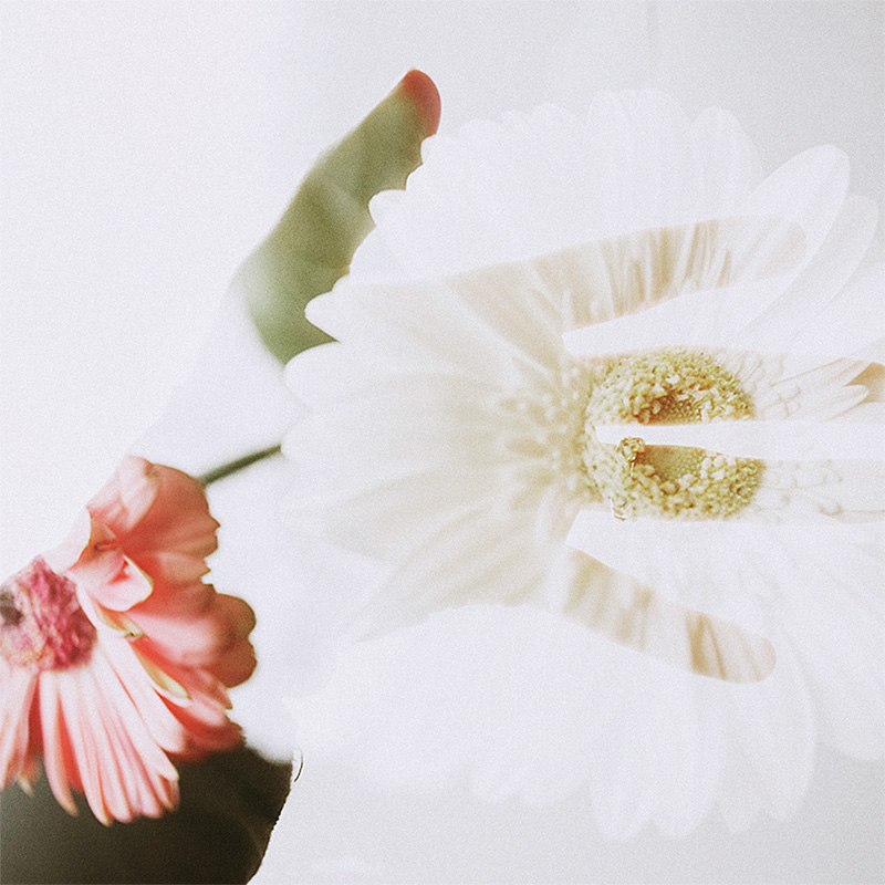 Double exposures in Photoshop - Silhouette of a hand overlayed with gerbera flowers