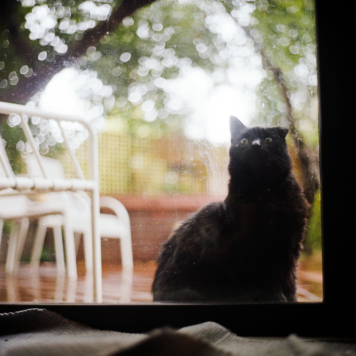 Photography Tips: Ragdoll Cat