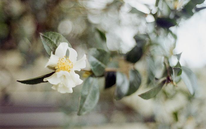 Nikon F100 - Portland lifestyle photographer - Portland Oregon
