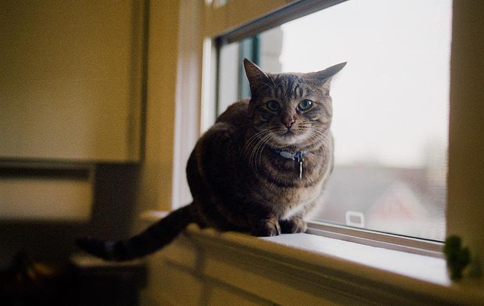 Portland Oregon Pet Photographer - Coen - Cats on Film
