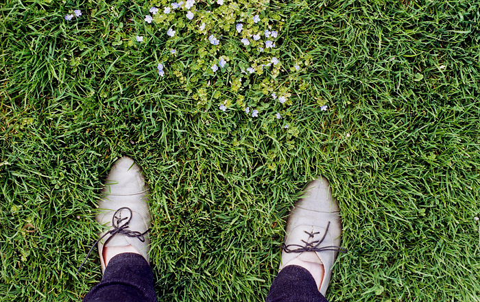 From Where I Stand - A Patch of flowers in Irving Park - Portland Lifestyle Photographer