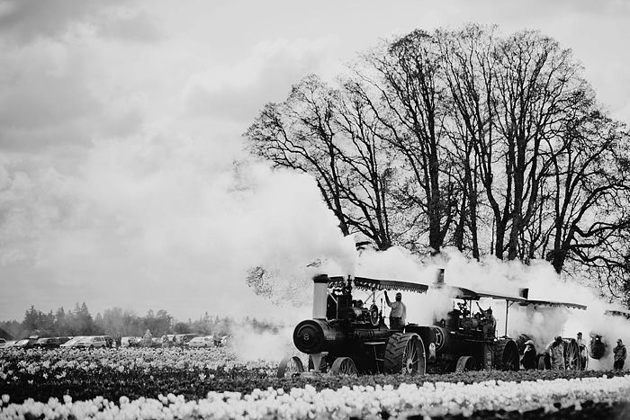 Steam Tractors - Portland Lifestyle Photographer - Wooden Shoe Tulip Farm - Woodburn, OR