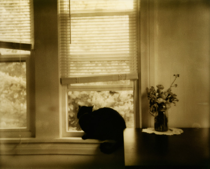 Portland Polaroid Photographer - PZ Silver Shade - Caturday - Lifestyle