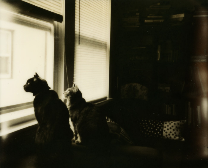 Two Cats Looking Out the Window - Polaroid Spectra - Impossible Project - Silver Shade