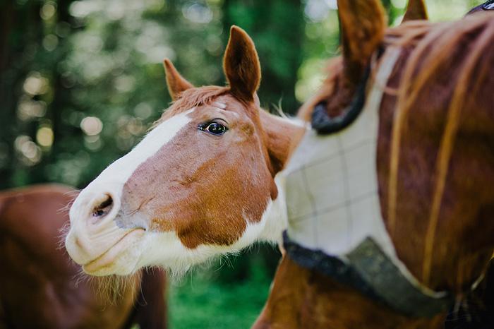 Wild horses - Camp Royaneh - Cazadero, CA