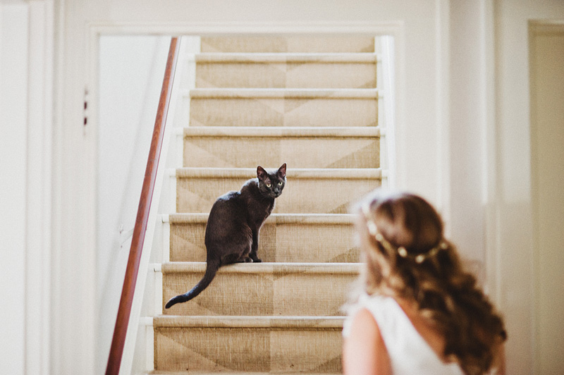 Multnomah Courthouse Wedding Photographer - Bride saying hello to her cat on the stairs