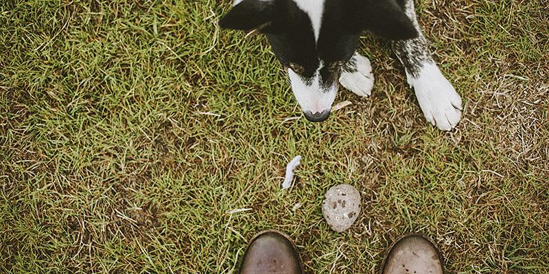 Loki the dog, in Heydalur, Iceland