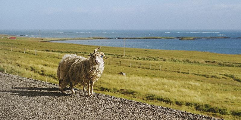 ísland gifting ljósmyndari