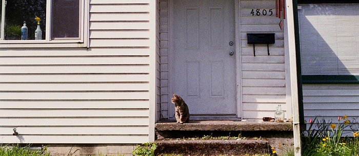 Cats On Film #3