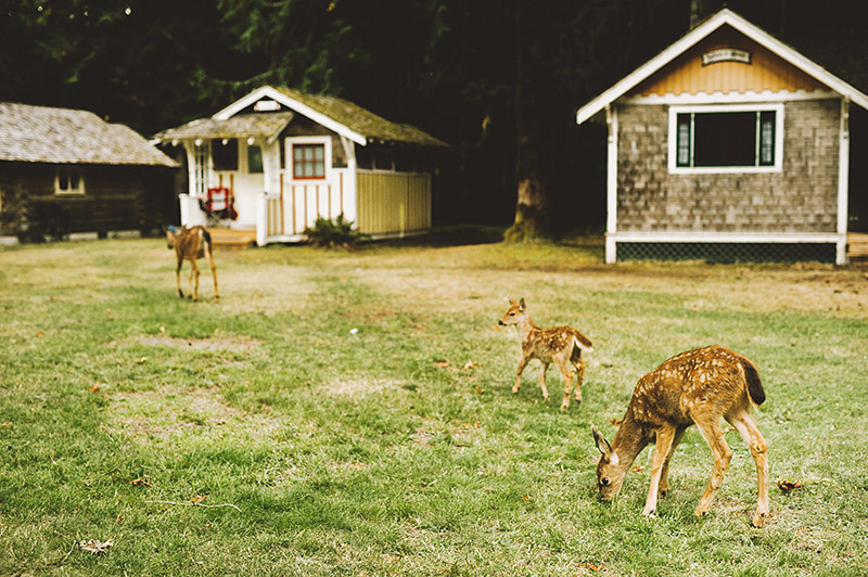 Deer roaming the grounds at Crystal and Dylan's Nature Bridge Wedding