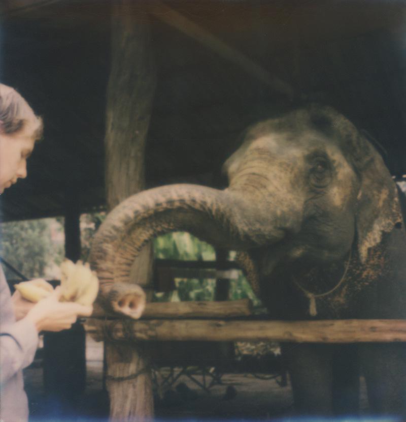 Chris feeding an elephant bananas in Thailand | SLR680 Polaroid