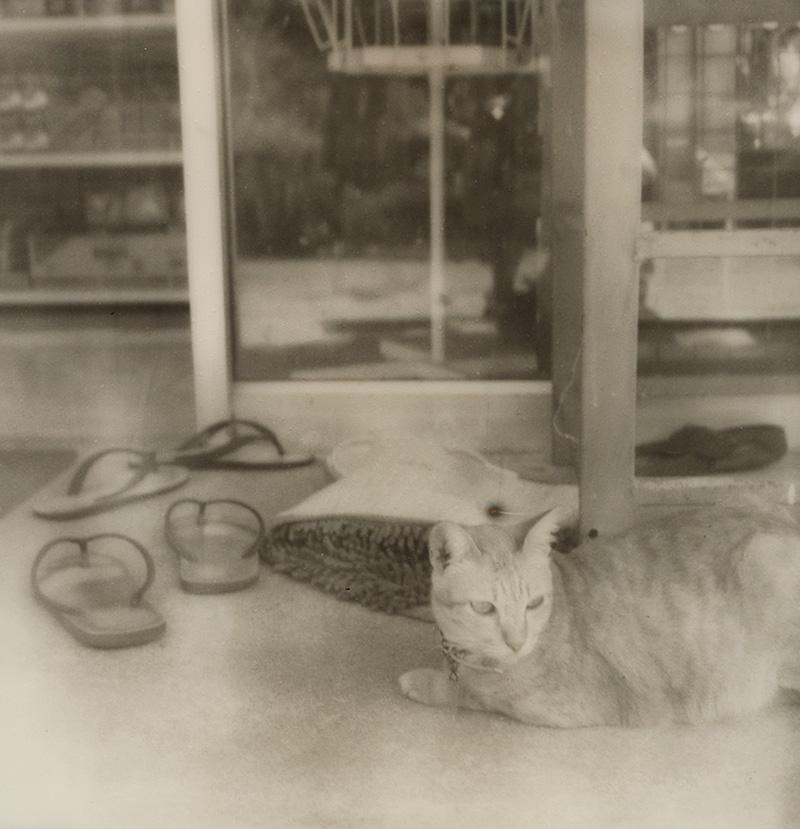 A bodega cat on Koh Mak in the Gulf of Thailand | SLR680 Polaroid
