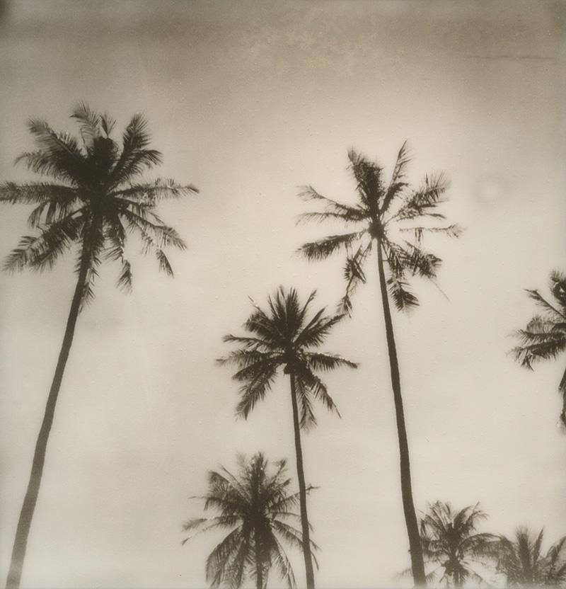 Palm trees in Thailand | SLR680 Polaroid
