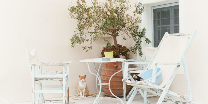 Cat Sitting on Patio in Santorini | Greece Wedding Photographer