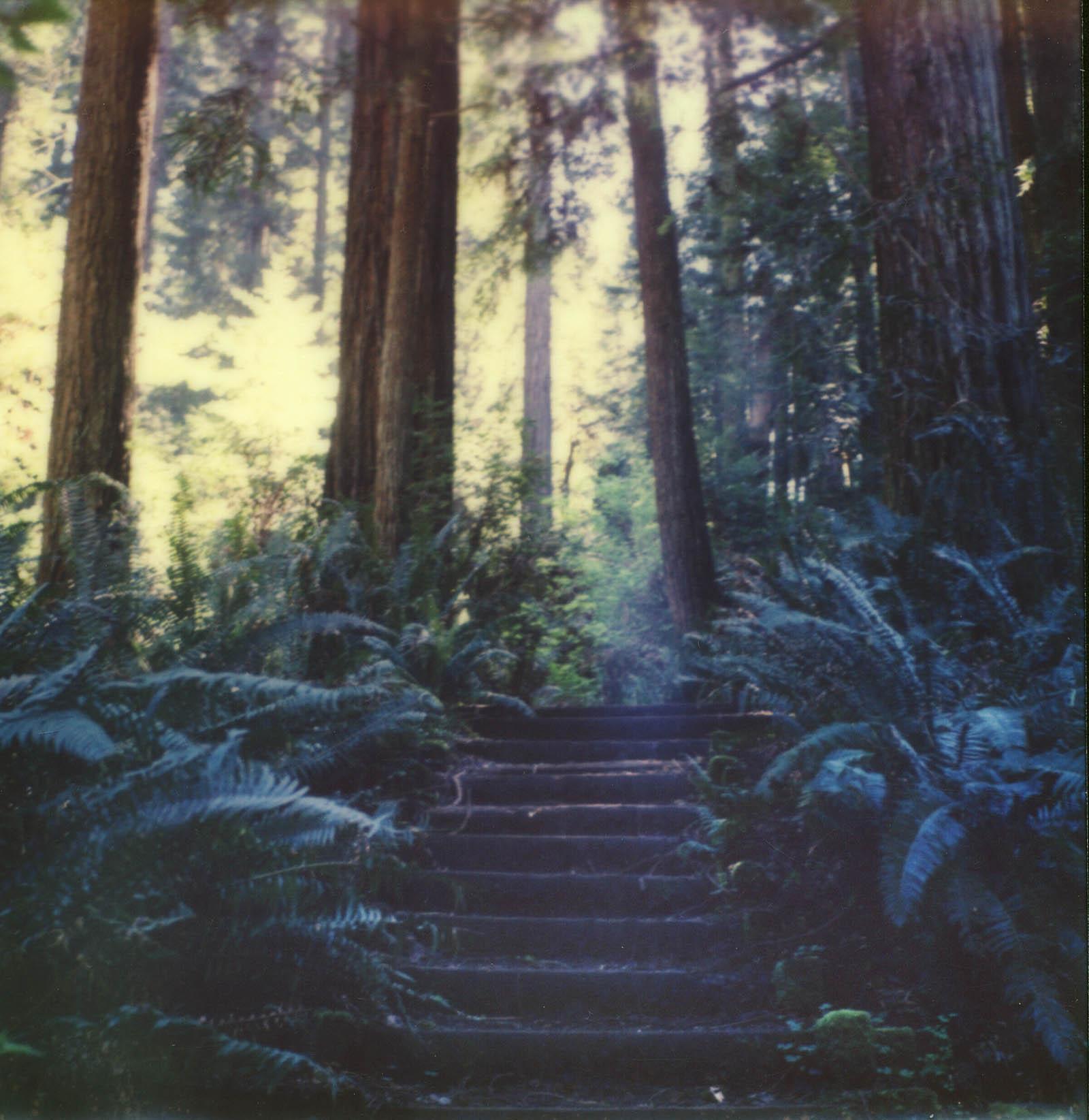 MiNT SLR670m Polaroid Review | Humboldt Redwoods