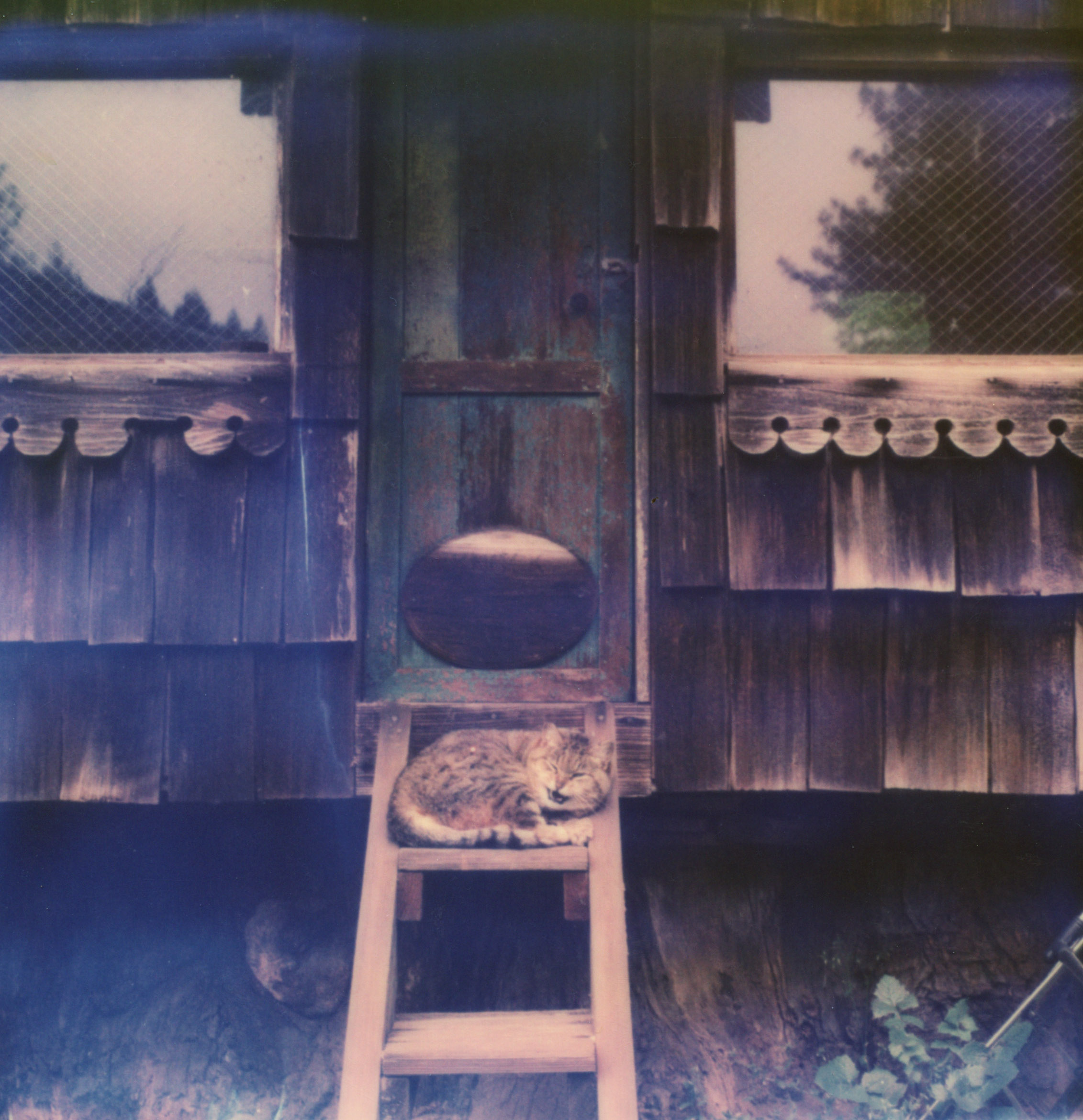 MiNT SLR670m Polaroid Review | Sleeping Cat in Humboldt County
