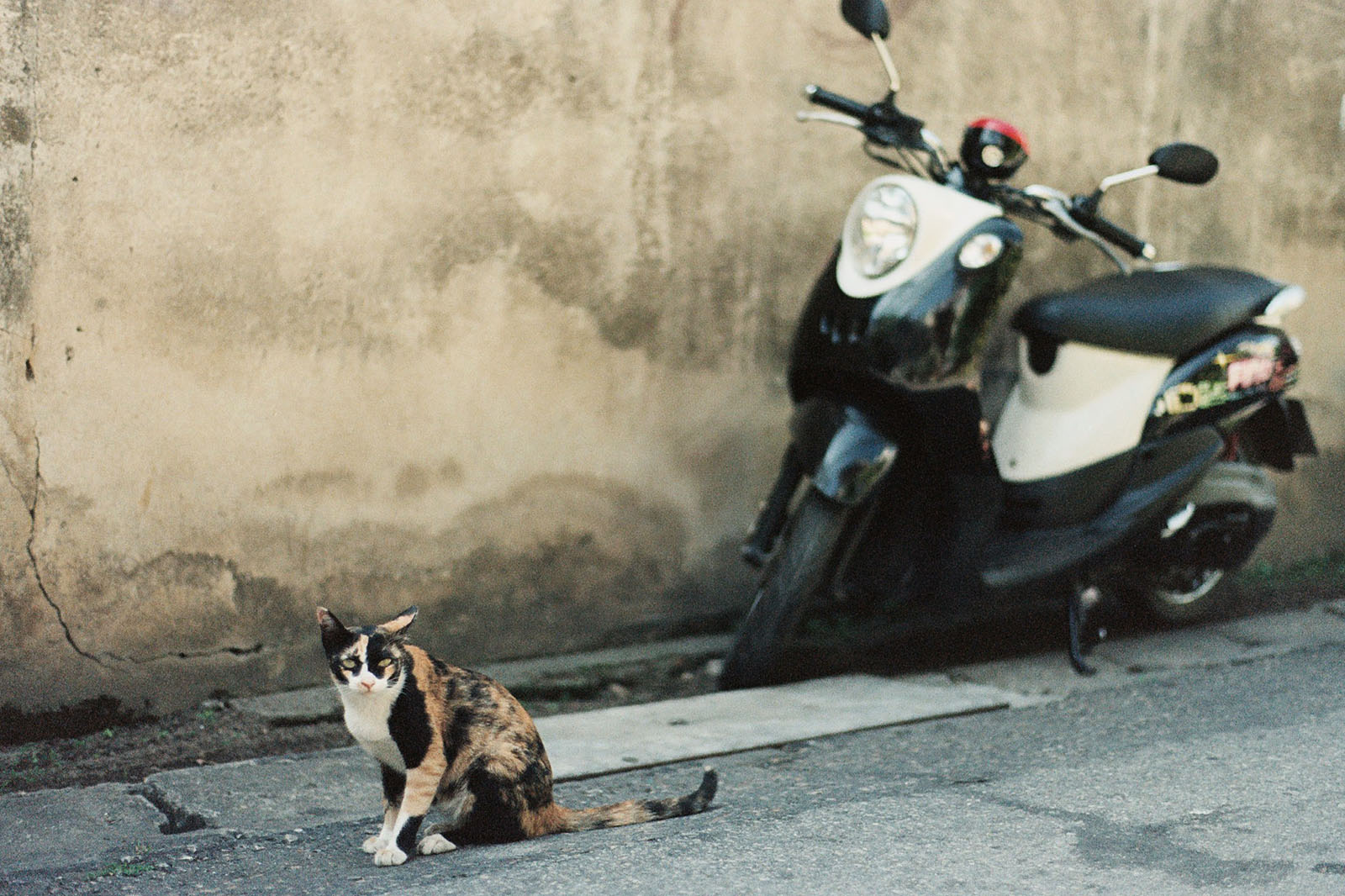 Street cat and a motorbike in Chiang Mai | Thailand Travel Photos