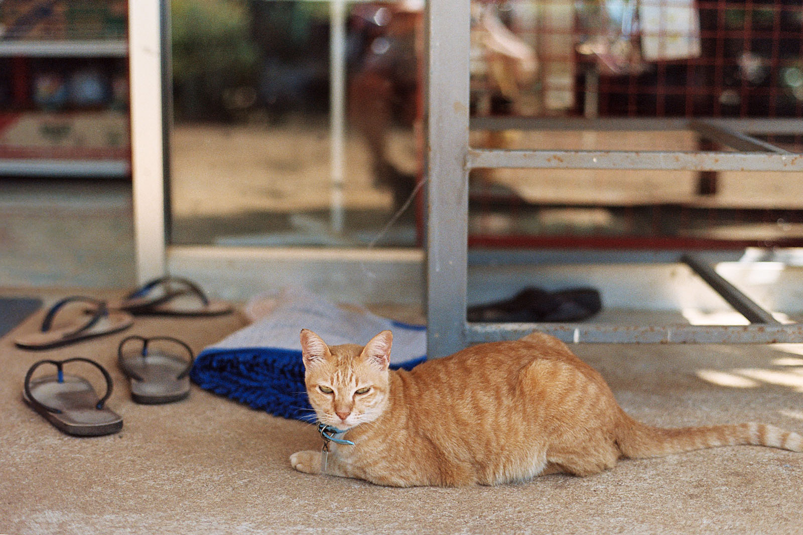 Koh Mak bodega cat guarding flip-flops | Thailand Travel Photos