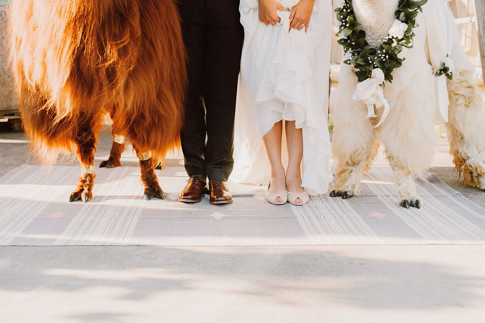 Bride and Groom's feet with Rojo and Napoleon the llamas | Portland Castaway Wedding
