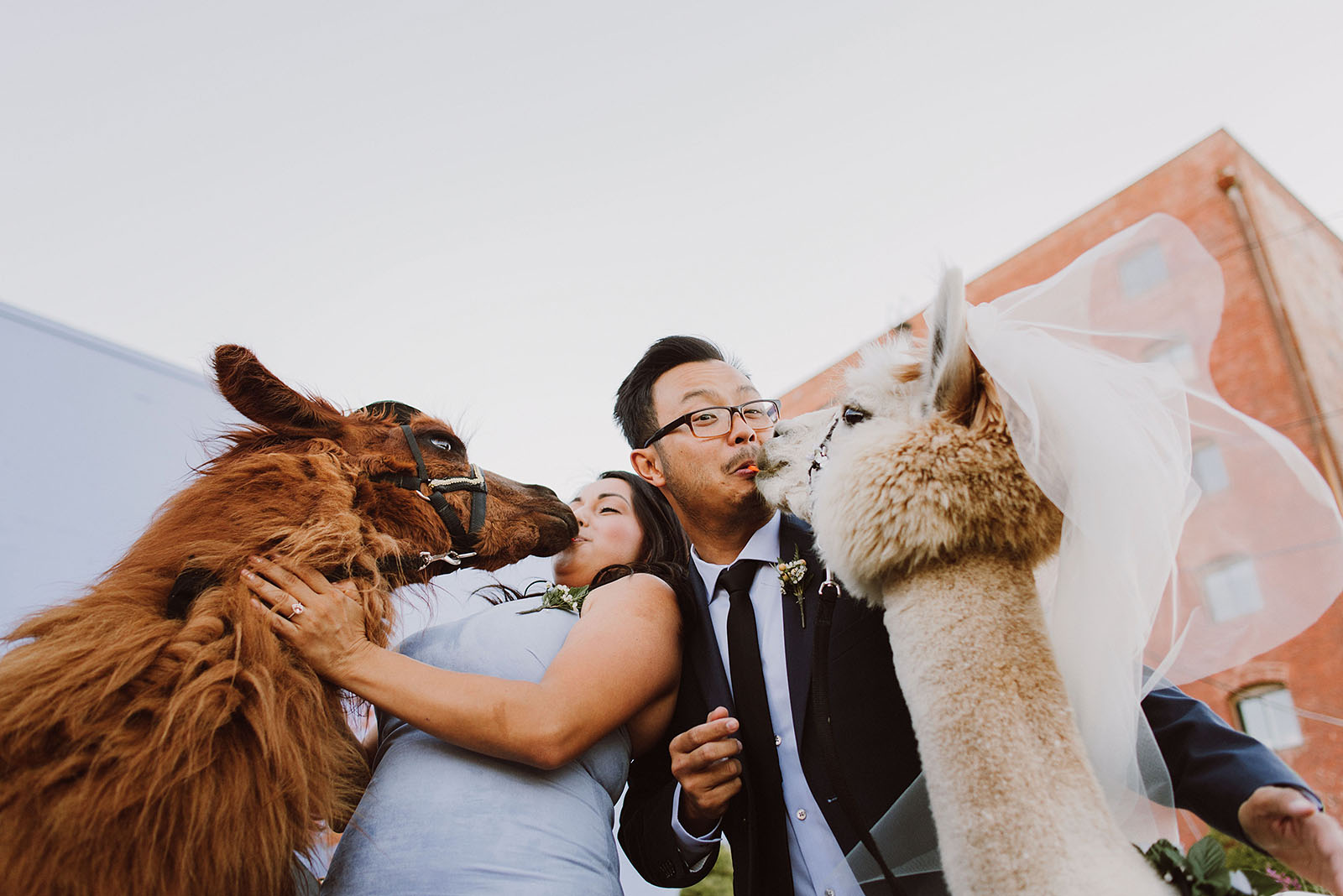 Guests feeding the llamas, Rojo and Napoleon, during cocktail hour | Portland Castaway Wedding