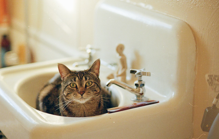 Kitten Sitting in Bathroom Sink