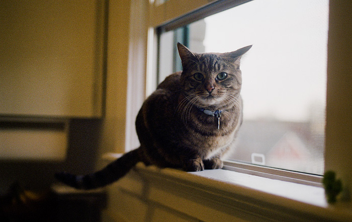 Portland Oregon Pet Photographer - Coen - Cats on Film