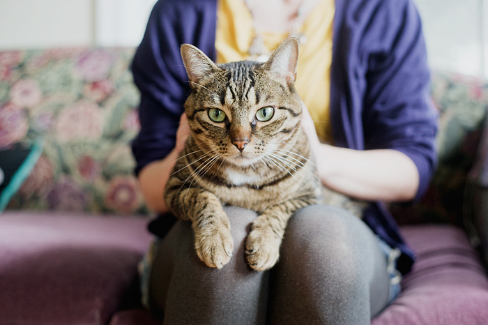 Jenica and Diego - Cat Portrait - Portland OR