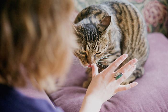 Cat Licking Owner's Hand - Portland Pet Photographer