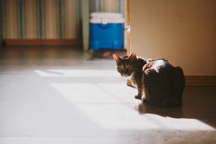 Diego in the Kitchen - Cat Portrait