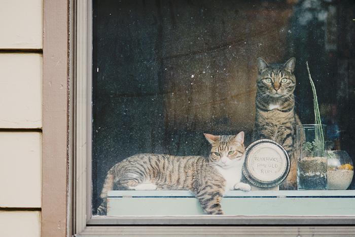 Cats in the Window - Portland Cat Portrait