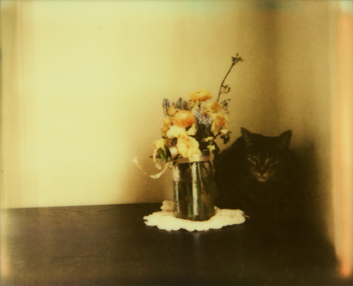 Portland Pet Photographer - Polaroid Spectra - PZ Color Shade