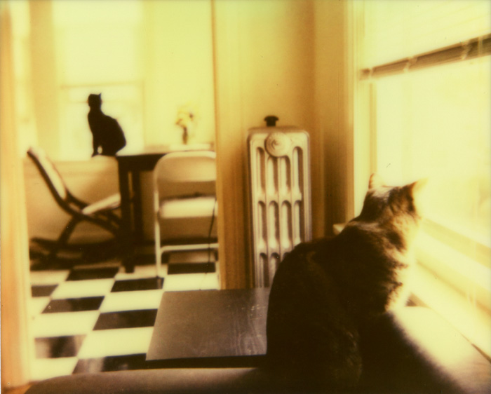 Cats Looking Out Opposite Windows - Polaroid Spectra - Impossible Project Color Shade Film