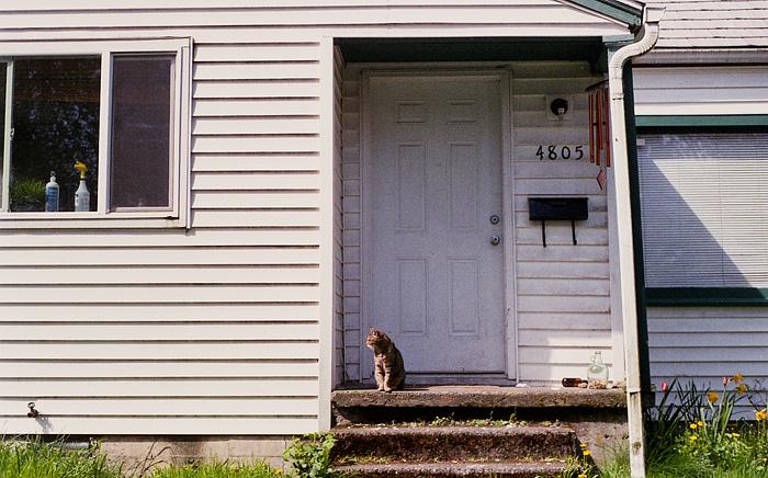 Portland Pet Photographer - Cat on Alberta