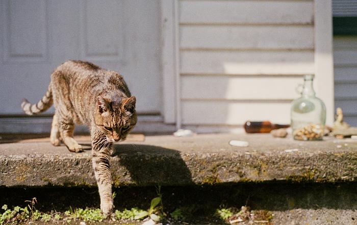 Portland Cat Photographer - Cat on Alberta
