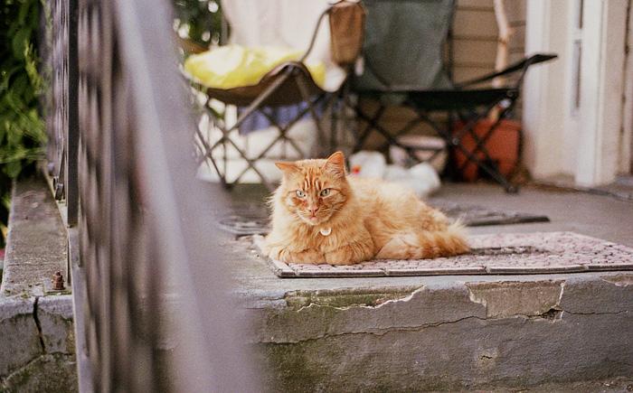 Portland Pet Photographer - Cat in Southeast Portland