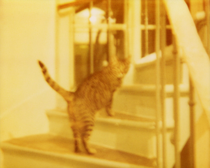 Polaroid Spectra Film - French Cat