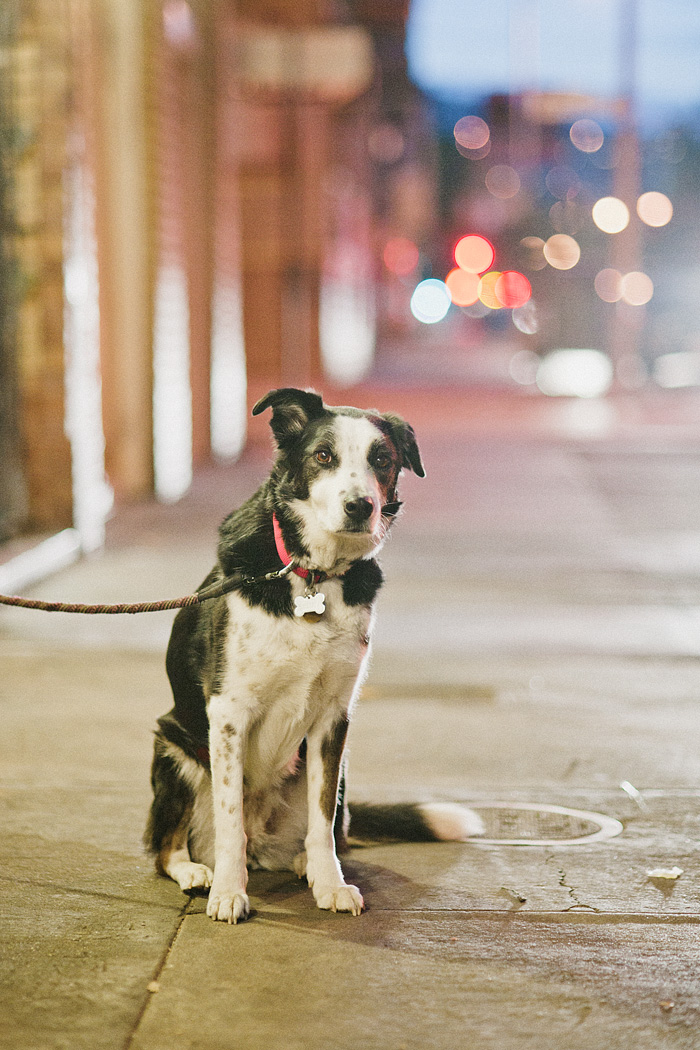 San Francisco Lifestyle Photographer - Dog Tied Up Outside Bi-Rite Market