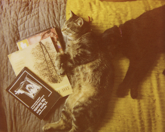 Portland Pet Photographer - Polaroid Spectra - Cats Napping with Books