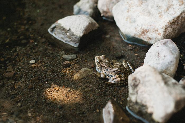 Hood River, OR - Frog at Lost Lake