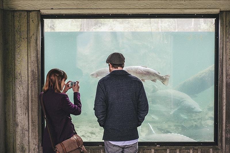 Portland Honeymoon Photographer - Karen & Josh watching the Columbia River Sturgeon