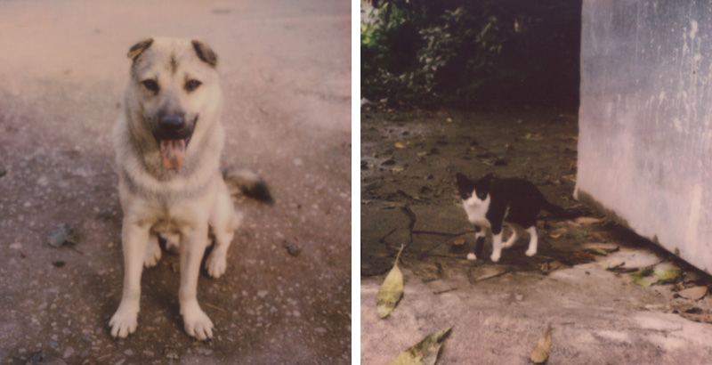 Stray animals in Thailand | SLR680 Polaroid