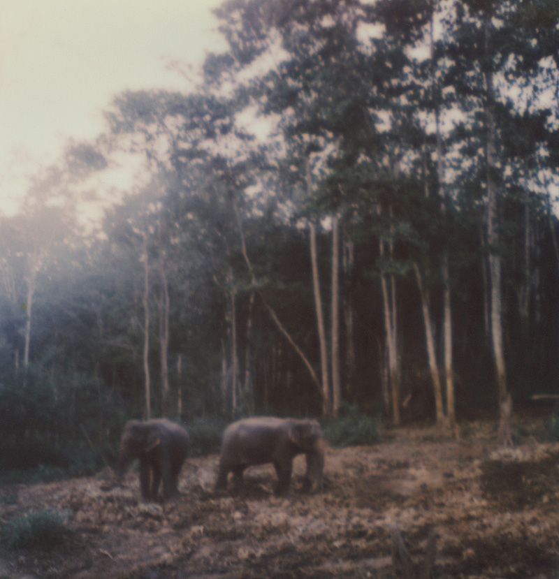 Elephants at Chai Lai Orchid | SLR680 Polaroid
