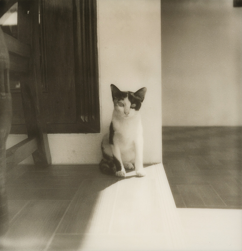 Stray cat on Koh Mak, Gulf of Thailand | SLR680 Polaroid