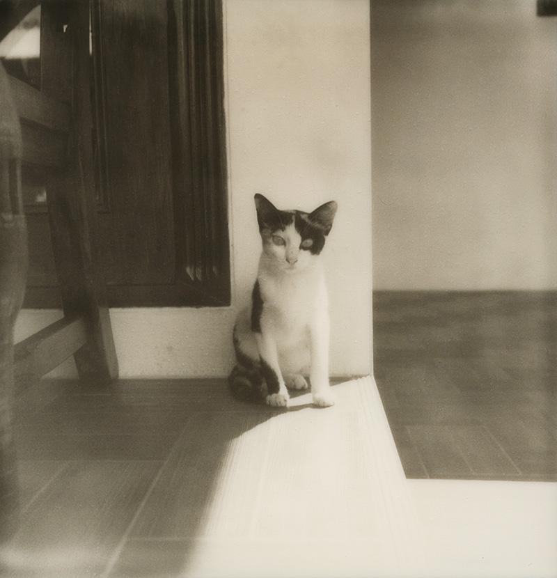 Stray cat on Koh Mak, Gulf of Thailand | SLR680 Polaroid
