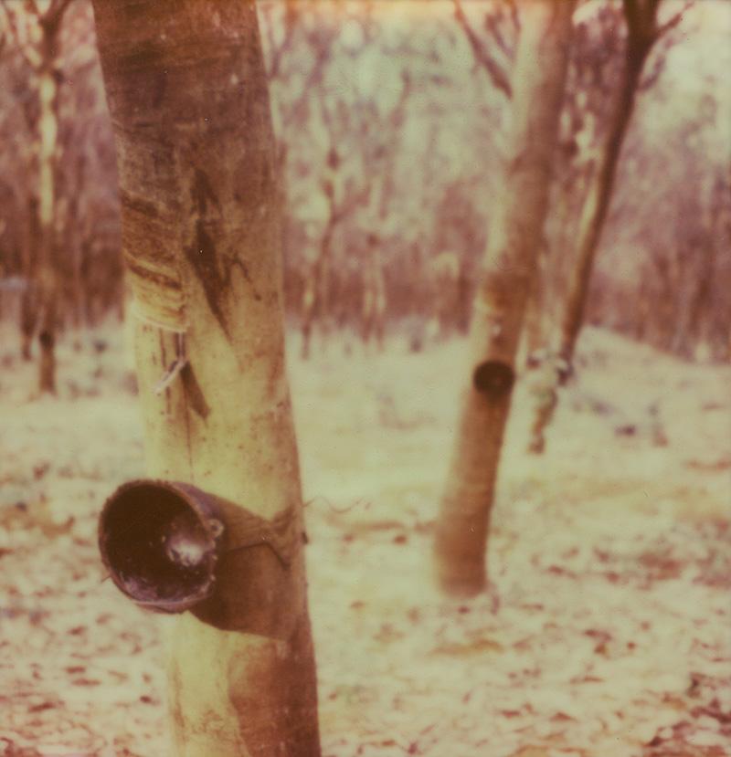 A rubber farm on Koh Mak, Gulf of Thailand | SLR680 Polaroid