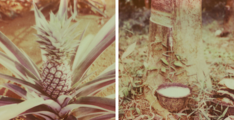 Pineapple and Rubber tree farms on Koh Mak, Gulf of Thailand | SLR680 Polaroid