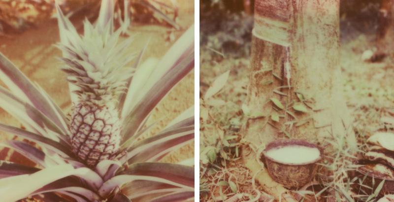 Pineapple and Rubber tree farms on Koh Mak, Gulf of Thailand | SLR680 Polaroid
