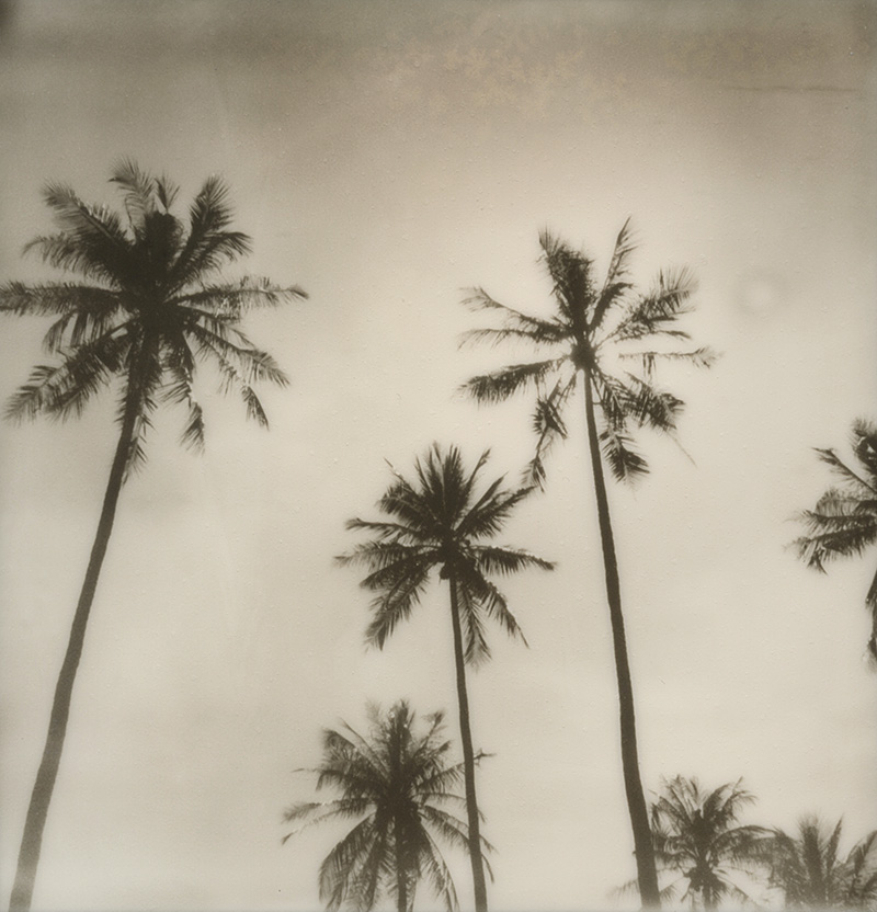 Palm trees in Thailand | SLR680 Polaroid