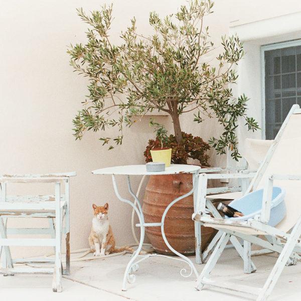 Cat Sitting on Patio in Santorini | Greece Wedding Photographer